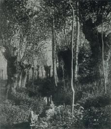 Aldebert Cuvelier; Forest at Fontainebleau; 1852; salted paper print from wet collodion negative; 16.2 x 14.5 cm
