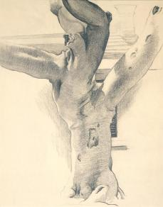 Georgia O'Keeffe; Banyan Tree; 1937; graphite on paper; Georgia O'Keeffe Museum