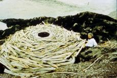 Andy Goldsworthy; Rivers and Tides; 2000