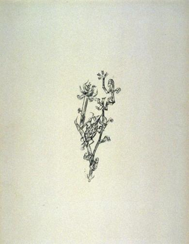 64_amiRiesenblattlaus Work Type Prints Date 1920 Material Lithograph Measurements 13.8 x 6 cm (image); 32.3 x 24 cm (sheet)