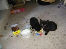 nuevos-inquilinos-gatos-3