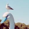 swanbird