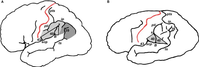 Diagram of Einstein's Brain