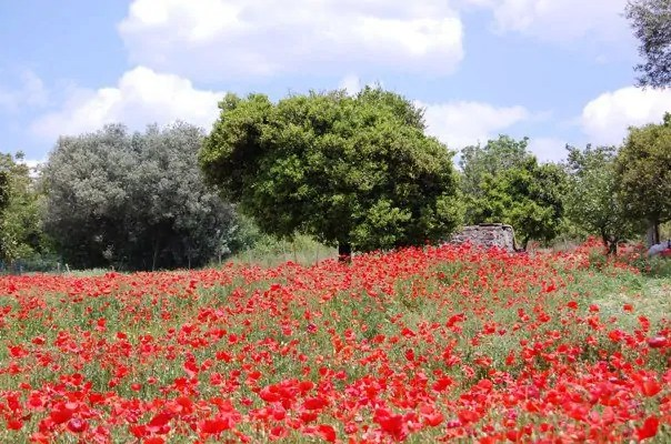 Flowers at Pompeii