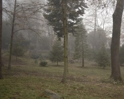 Boyana Churchyard in the Morning Fog