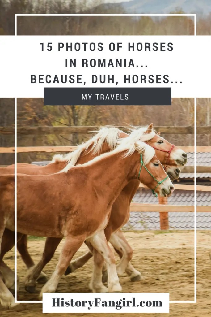 15 Photos of Horses in Romania...because, duh, Horses...