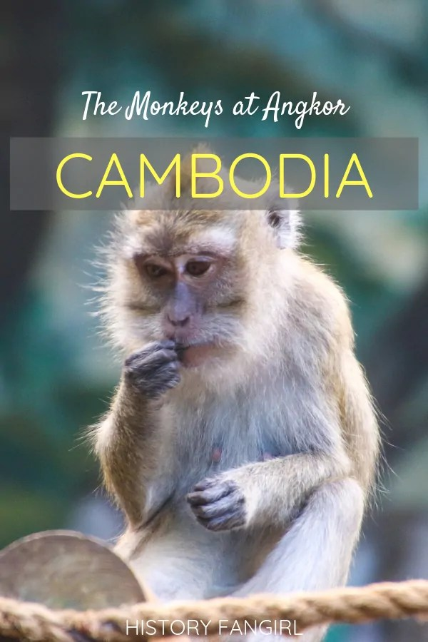 The Angkor Wat Monkeys in Cambodia