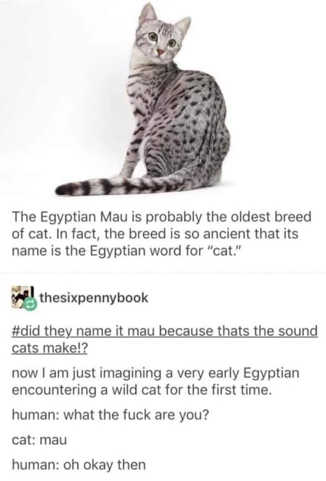 egyptian cat meme