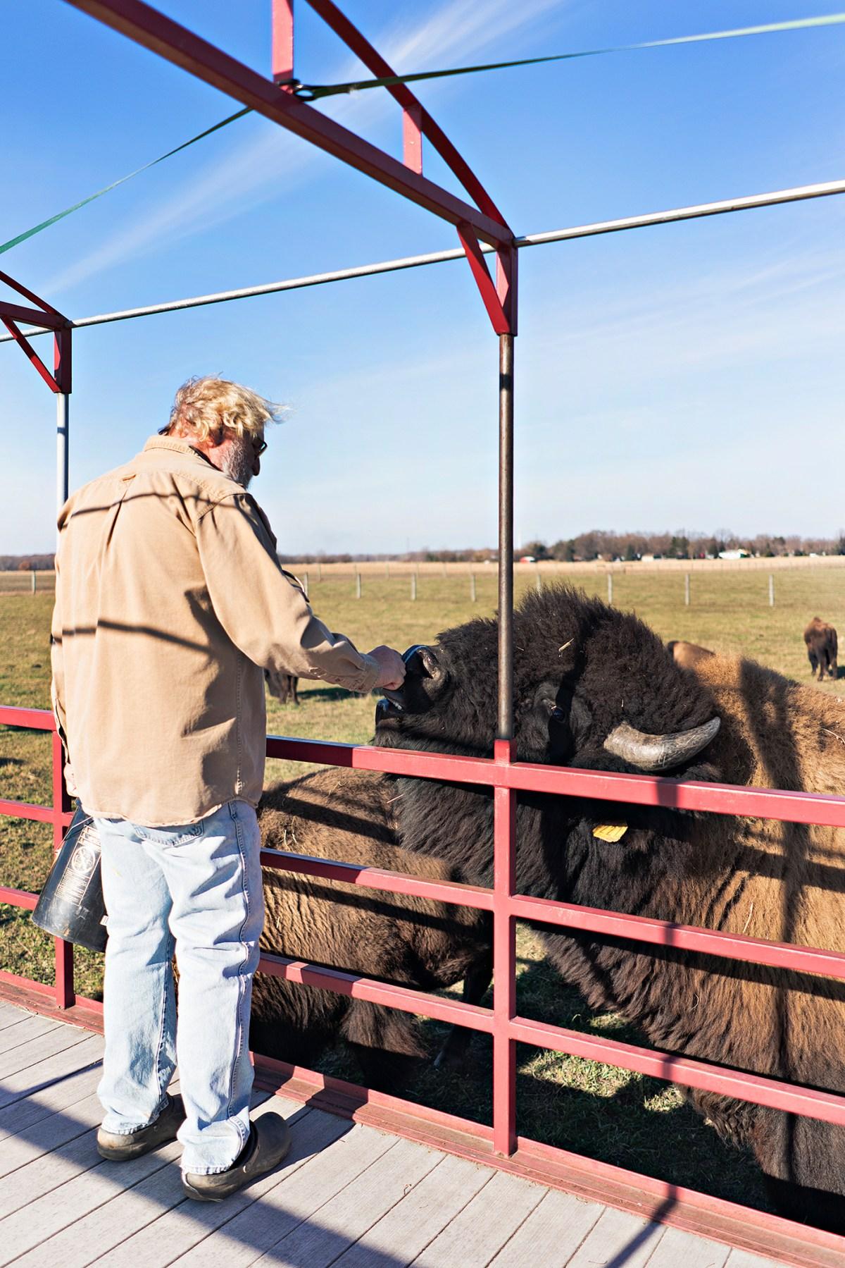 Broken Wagon Bison Farm