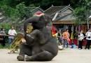 Zimbabwe: 750 Elephants poisoned using cyanide! – Blacks sell Elephants & wildlife to China!