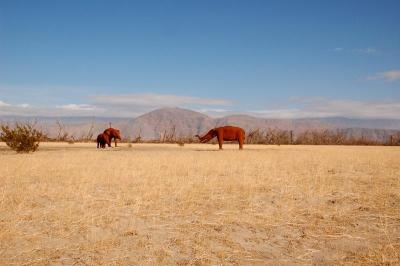 dsc_0145-gomphotheriums-grazing.jpg