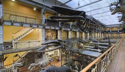 Natural History Museum of Ireland – Floor 2