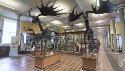 Natural History Museum of Ireland – Ground Floor