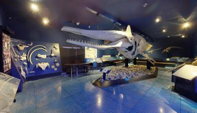 Oman Natural History Museum 3D Model