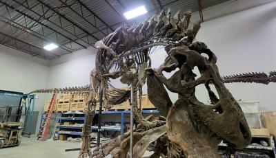 Smithsonian's National Museum of Natural History: Inside a T. rex