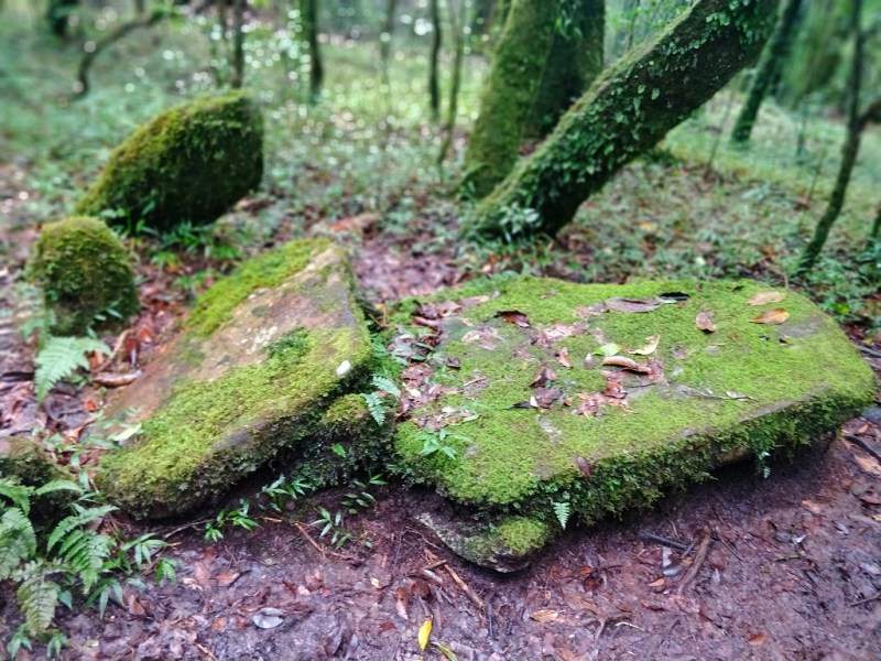 Symbolizing an area where animal sacrifice was prepared - Mawphlang Sacred forest