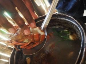 Tintenfisch anbraten, Haifisch Rezept, Rezept Tintenfisch, frittierter Tintenfisch, Rezept frittierte Meeresfrüchte, Hummer Rezept, Hummer kochen, Hummer Gericht