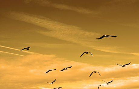 התבודדות ב׳ – לפתוח מרחב – הרב אייל ישראל שטרנליב