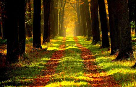 התבודדות – הרב שלום סבג