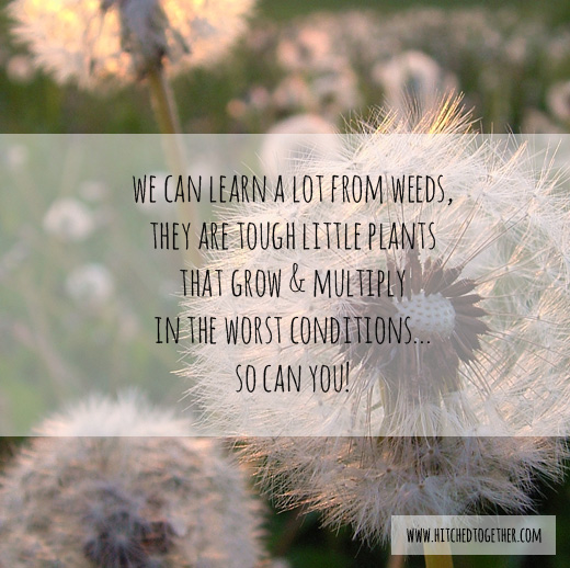 8 things missionaries can learn from weeds.
