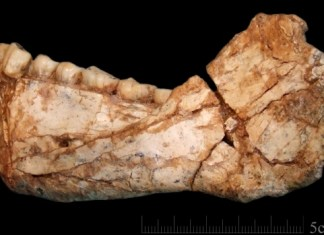 Morocco's oldest Homo sapiens fossils findings will shock you!
