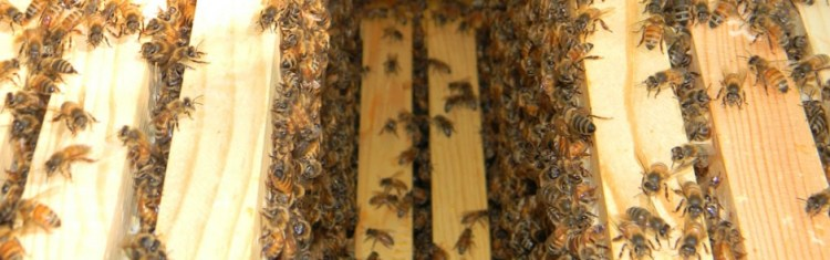 Inside of a bee hive with a couple of frames missing