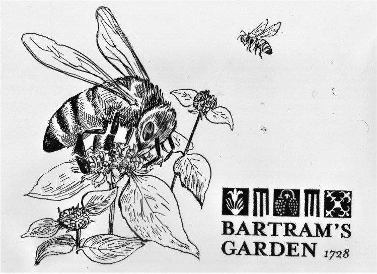 Illustration of mountain mint with bees