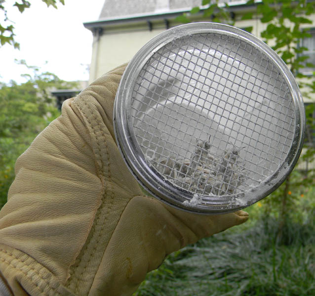 A gloved hand holds a mason jar containing a cup of bees and powdered sugar for a sugar roll mite test