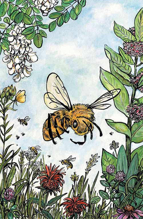 The cover art for Bee Lives We Will Only Know Summer