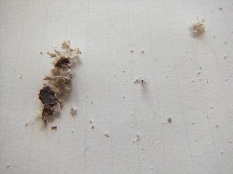 2回目の洗浄後に取れたゴミ