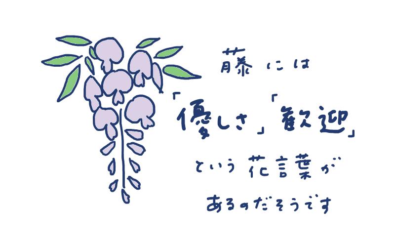 藤の花言葉は「優しさ」「歓迎」だそうです