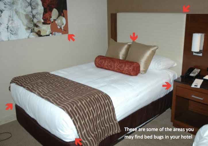 Avoiding bed bugs when traveling tips guiding hotel guests where to look to find evidence of bed bugs in their room.