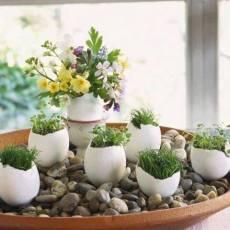 Зелена градина в стаята от черупки на яйца