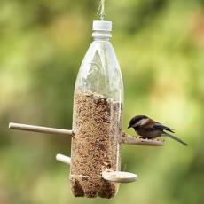 Хранилка за птици в градината