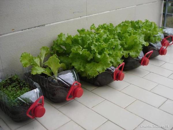 зеленчукова градина в бутилки
