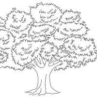 Pernah Diminta Menggambar Pohon Ketika Psikotest ? Ini Dia Triknya