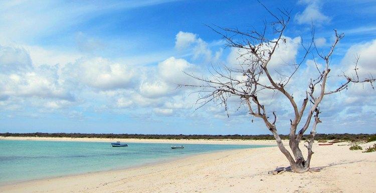 RosaBussarna_Madagaskar01
