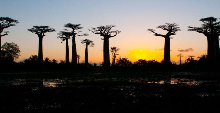 RosaBussarna_Madagaskar02