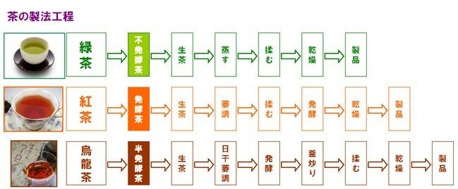 茶の製法工程.jpg