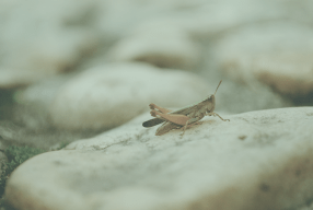 What to Do When You're Creating Content to the Tune of Crickets