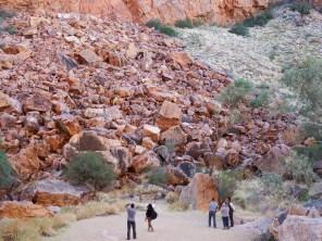 Rock Wallabies hiding