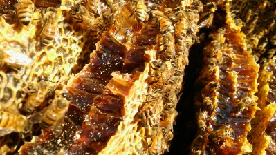 Close up of bees on honeycomb.