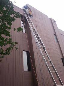 Bee removal in Pasadena up high on a ladder.