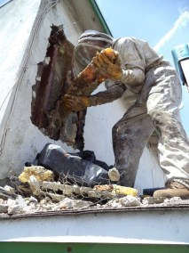 Honeycomb extraction during live bee removal in Long Beach.