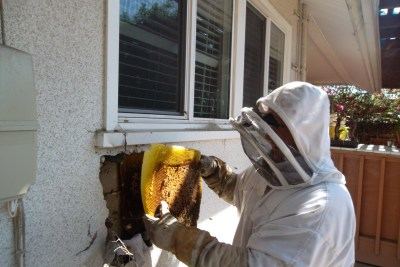 Removing honeycomb from a wall in Laguna Niguel CA.