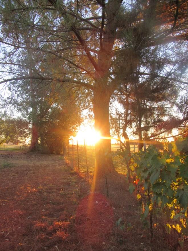 Morning Sunrise 021