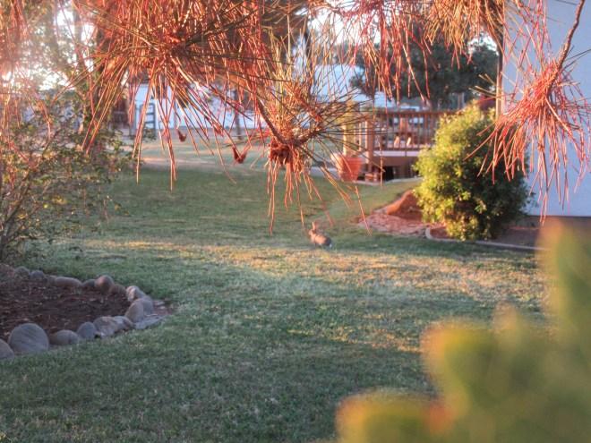 Morning Sunrise 022