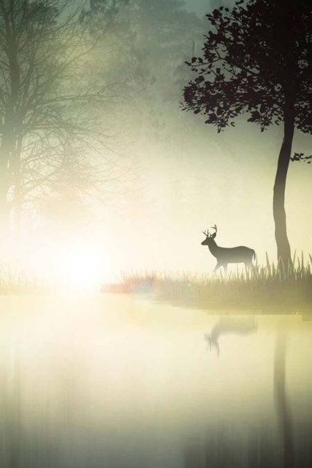 Dear in the mist and light