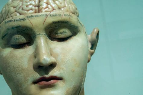 sculpture of human head and brain