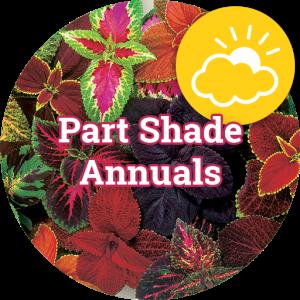 Part Shade Annuals